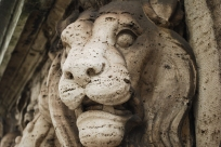 Lion in Rome
